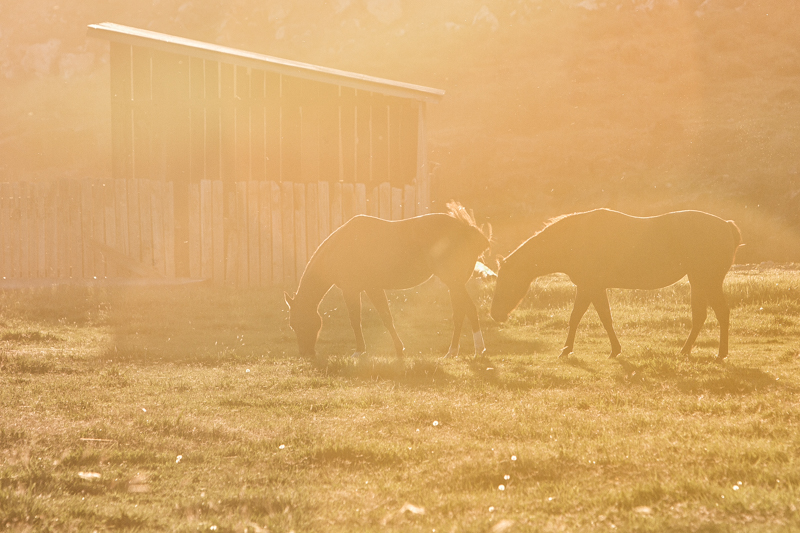 Horses - BlueDesertPhoto