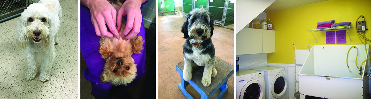 grooming at Coombs Kennels